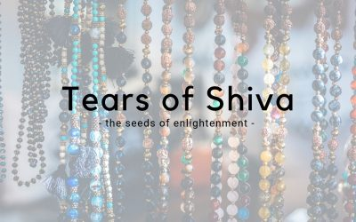 Tears of Shiva – Seeds of a sacred tree